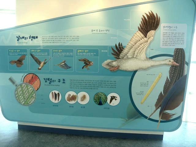 체험 학습장으로 좋은 서천군 조류(鳥類)생태전시관
