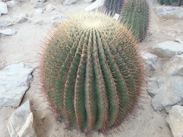 서천국립생태원2 (시어머니방석)