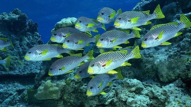 물고기 등에 관한 꿈